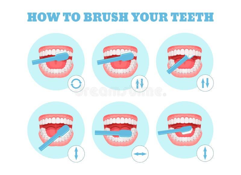 Plan étape-par-étape, instructions sur la façon dont se brosser les dents correctement illustration de vecteur