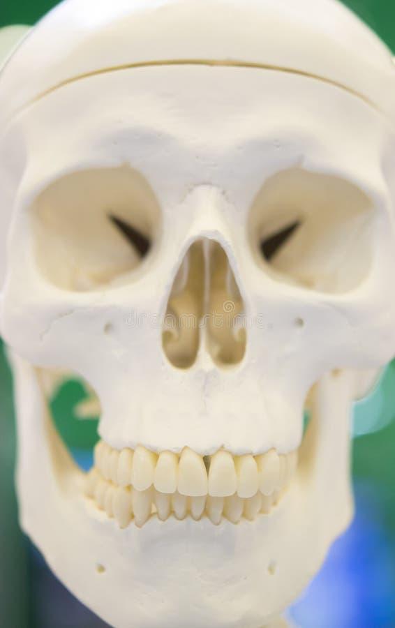 Plan einer menschlichen Schädelnahaufnahme lizenzfreie stockfotos