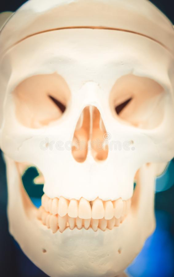 Plan einer menschlichen Schädelnahaufnahme, medizinisch lizenzfreies stockbild