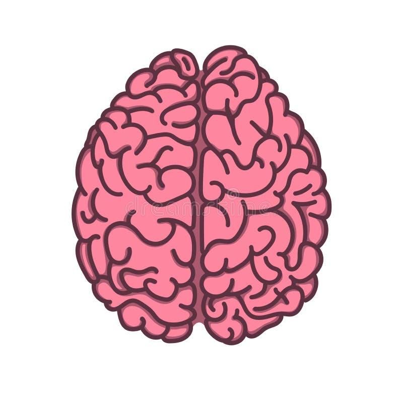 Plan illustration för mänsklig hjärna för stil vektor illustrationer