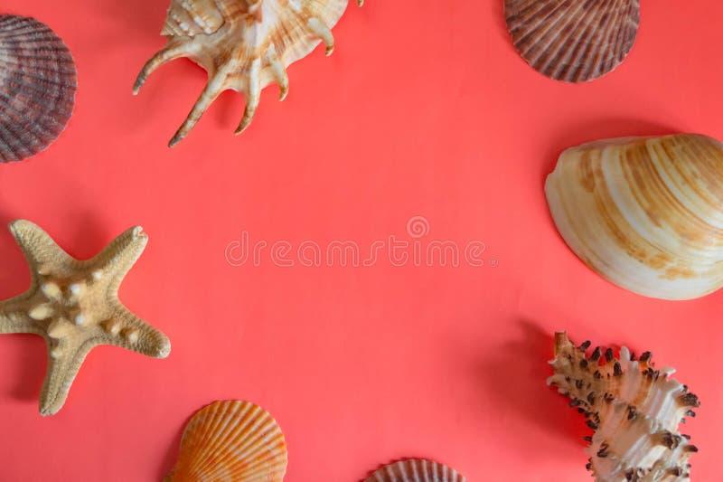 Plan lekmanna- bosatt korallbakgrund med ett ställe för text snäckskal Bakgrund för design royaltyfri fotografi