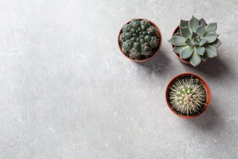Plan lekmanna- sammansättning med olika suckulenta växter i krukor på den gråa tabellen Hem- dekor arkivbild