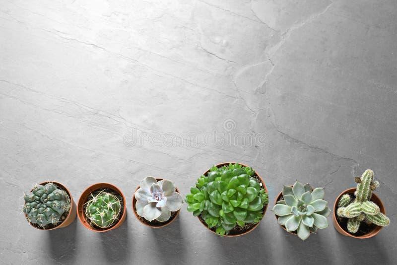 Plan lekmanna- sammansättning med olika suckulenta växter i krukor på den gråa tabellen Hem- dekor royaltyfria foton