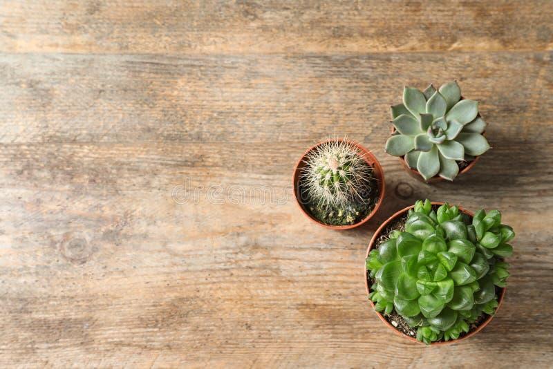 Plan lekmanna- sammansättning med olika suckulenta växter i krukor på trätabellen Hem- dekor fotografering för bildbyråer