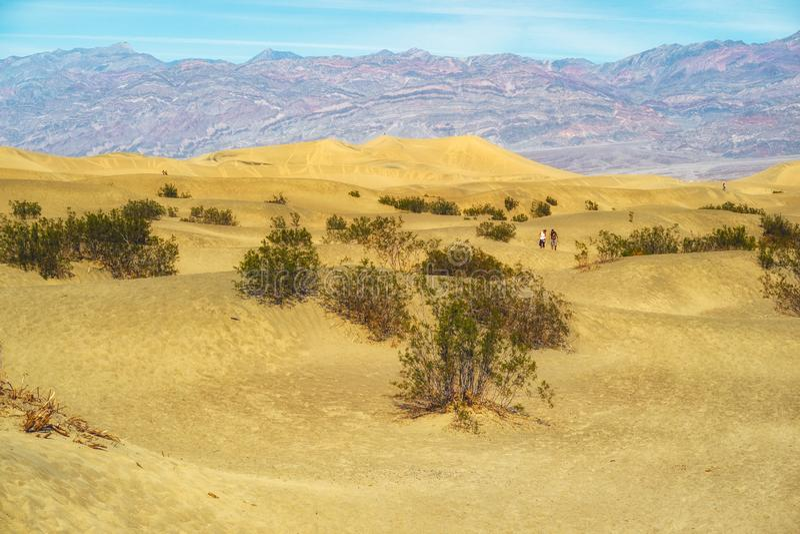 plan mesquitesand f?r dyner dal f?r Kalifornien d?dnationalpark arkivbild