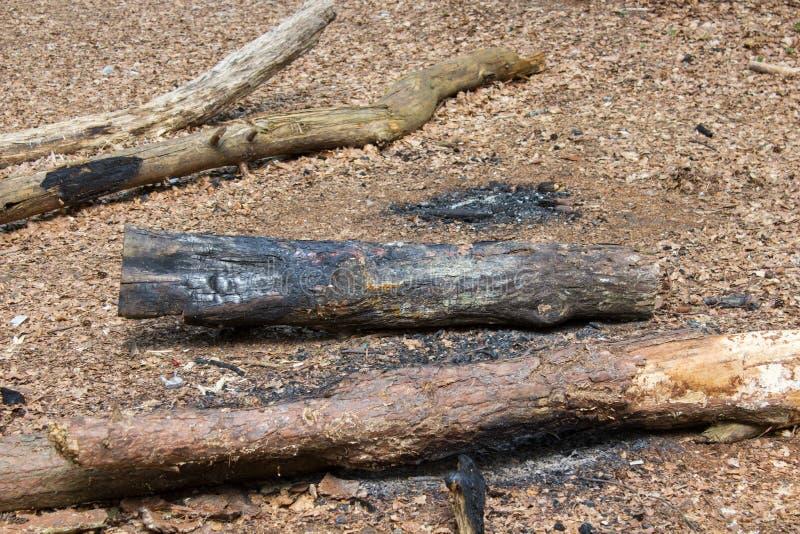 Plan rapproché éteint de feu de camp à la forêt photos stock
