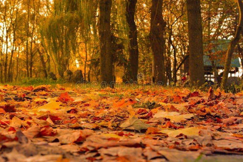 Plan rapproché animé des feuilles d'automne en baisse avec le contre-jour du soleil image stock