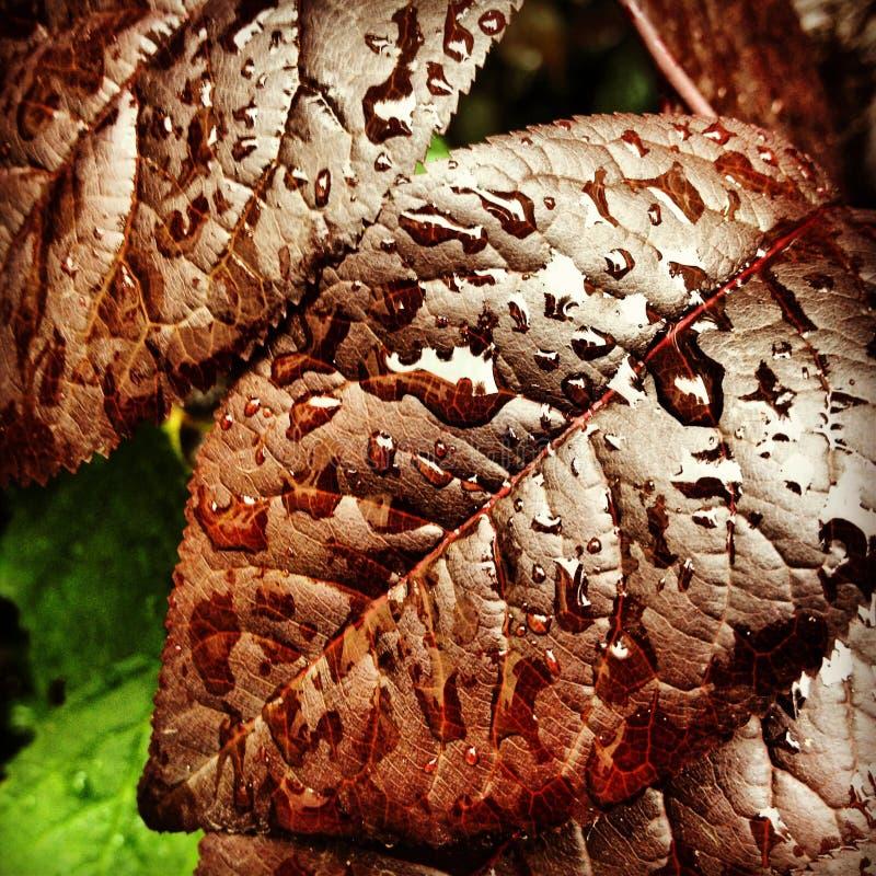 Plan rapproché avec les feuilles fraîches photo stock
