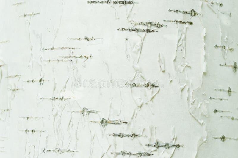 Plan rapproché blanc et noir d'écorce de bouleau naturelle de rayures de fond photographie stock libre de droits