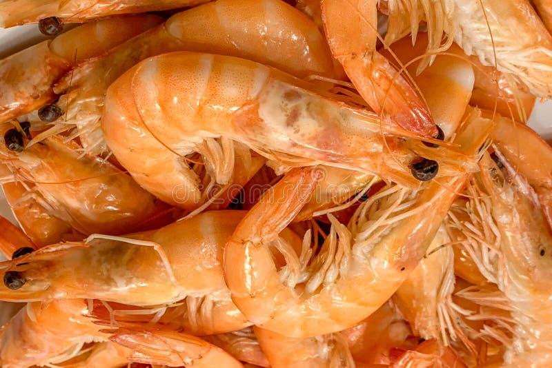Plan rapproch? bouilli royal de crevette photo stock