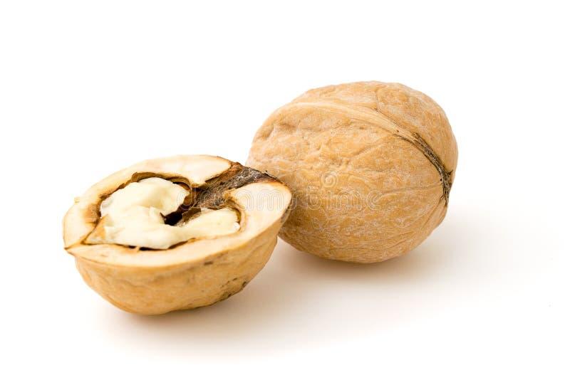 Plan rapproché brun de noix sur le blanc photos libres de droits