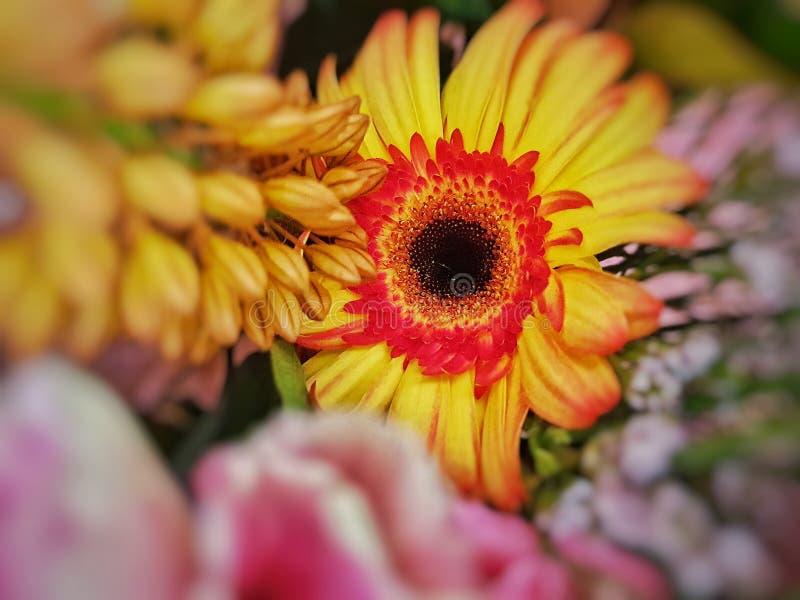 Plan rapproché coloré jaune lumineux de fleurs images stock