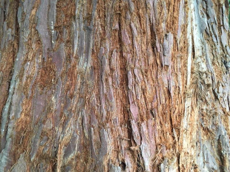 Plan rapproché d'écorce d'arbre de fond - séquoia californien Sempervirens de séquoia photographie stock libre de droits
