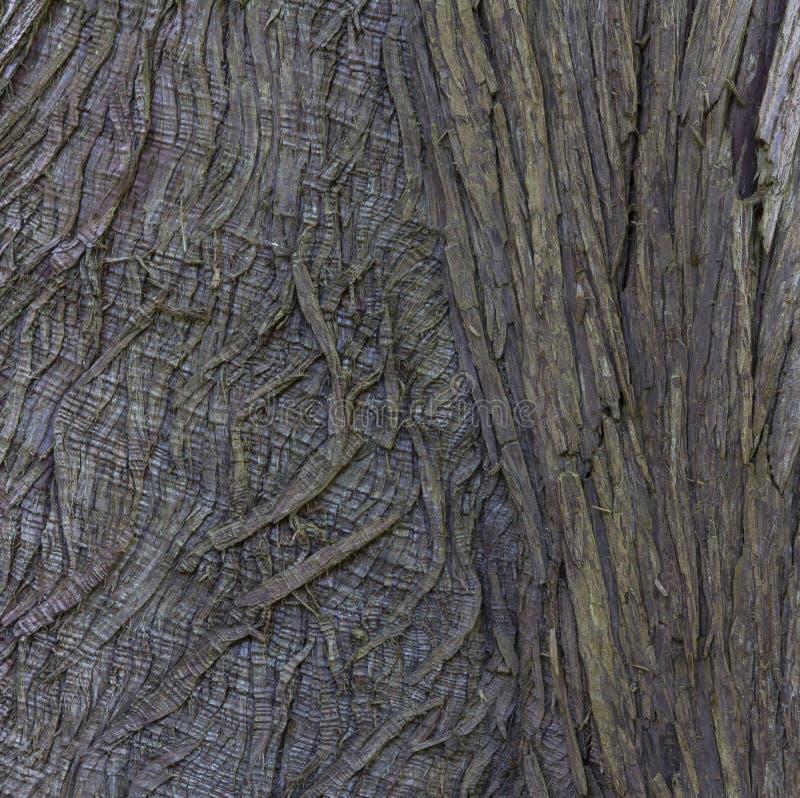 Plan rapproché d'écorce d'arbre pour le fond texturisé abstrait photographie stock libre de droits