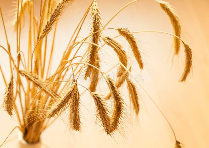 Plan rapproché d'épi d'or de blé photo libre de droits