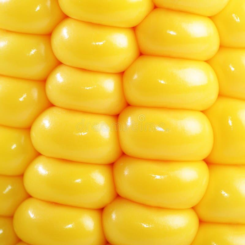 Plan rapproché d'épi de maïs photographie stock