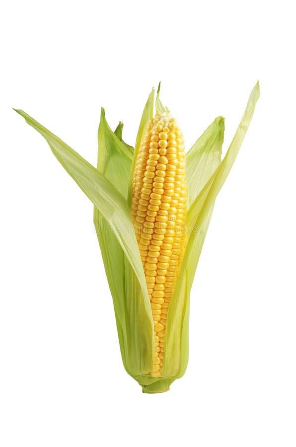 Plan rapproché d'épi de maïs photo libre de droits