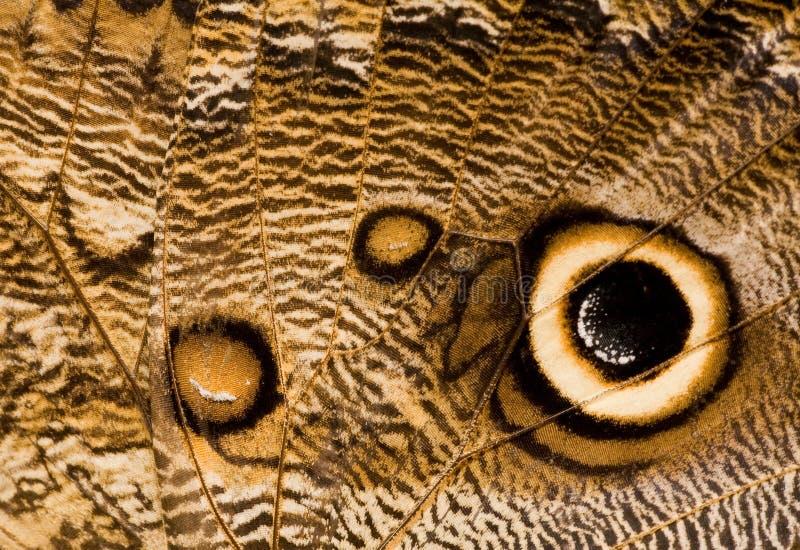 Plan rapproché d'aile de guindineau de hibou images stock
