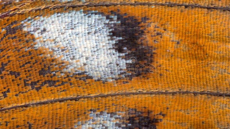 Plan rapproché d'Extrime de texture orange d'aile de papillon photo stock