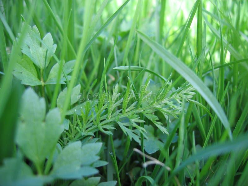Plan rapproché d'herbe photos libres de droits