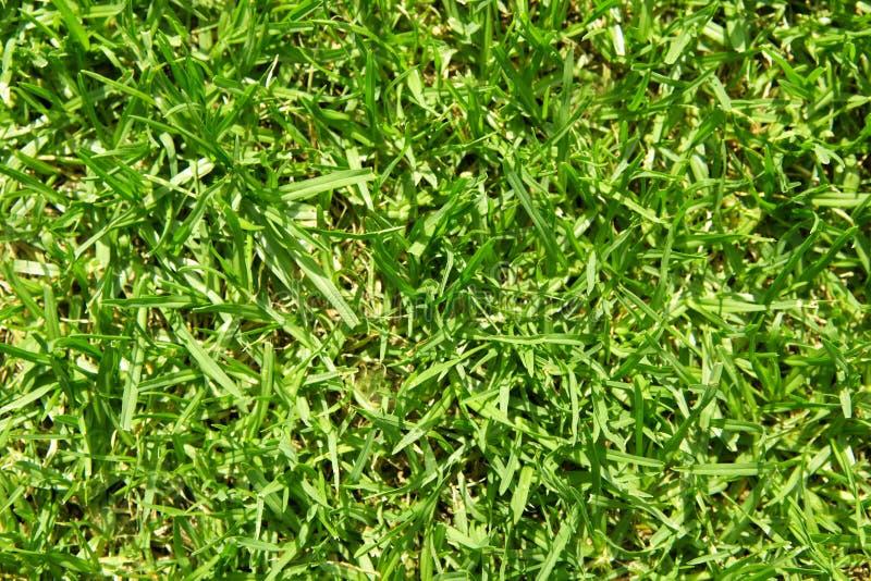 Plan rapproché d'herbe verte photographie stock libre de droits