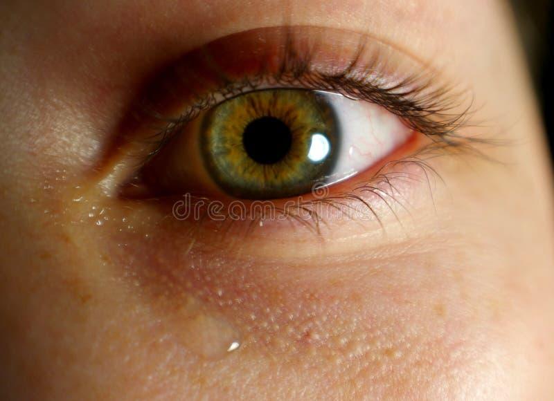 Plan rapproché d'oeil avec la larme photographie stock libre de droits