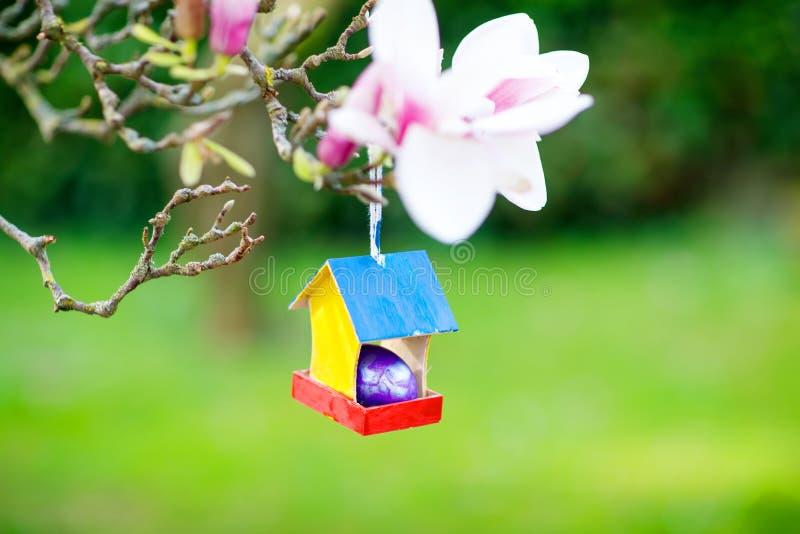Plan rapproché d'oeuf de pâques coloré dans la maison d'oiseau sur l'arbre de floraison de magnolia photos stock