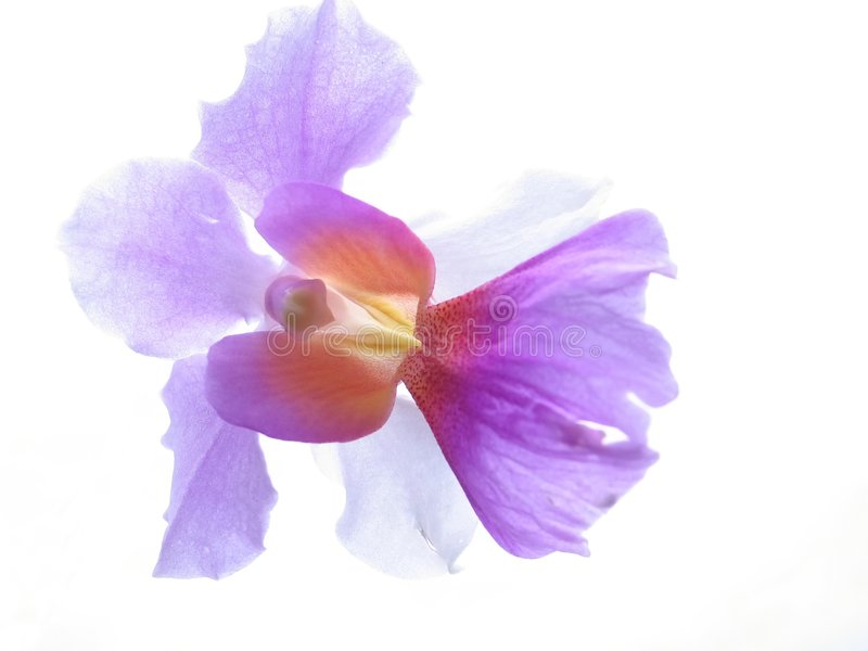 Plan rapproché d'orchidée images stock