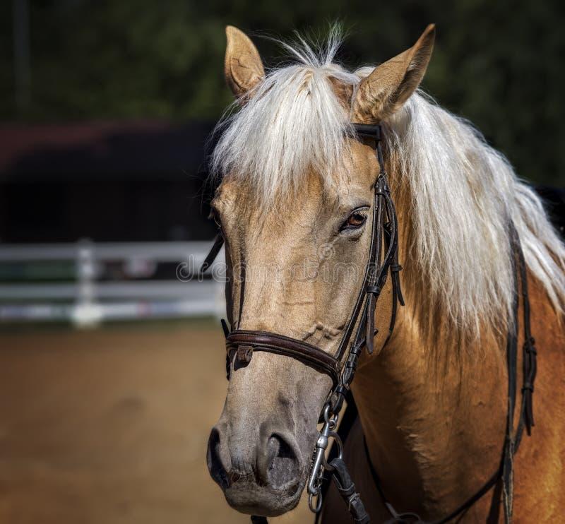 Plan rapproché d'un beau cheval dans une ferme photos stock
