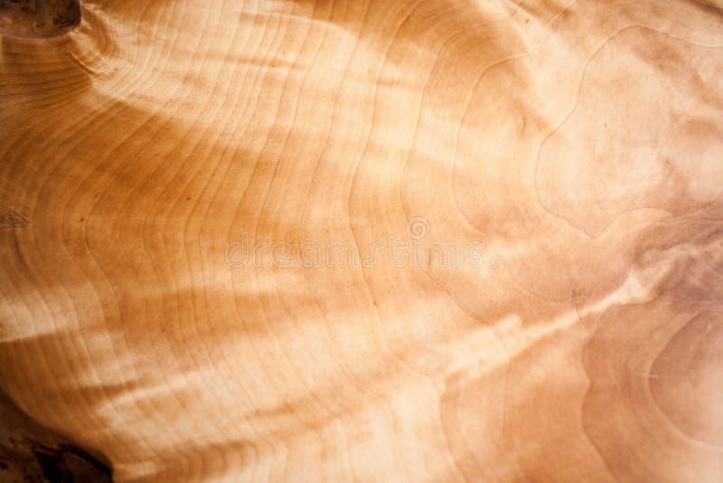 Plan rapproché d'un beau modèle naturel iridescent et miroitant de noeud en bois photos libres de droits