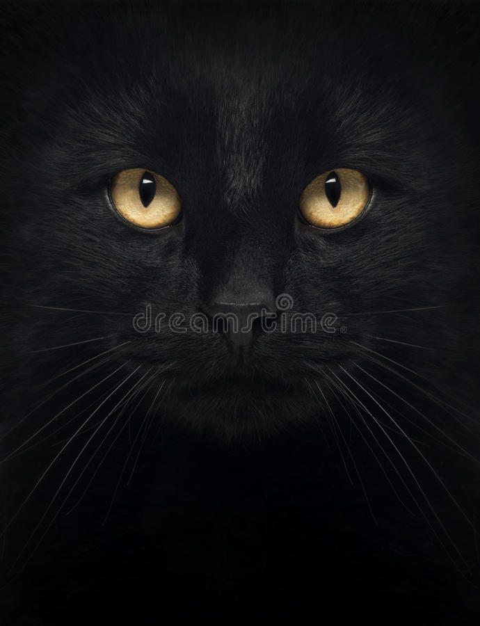 Plan rapproché d'un chat noir regardant l'appareil-photo photo libre de droits