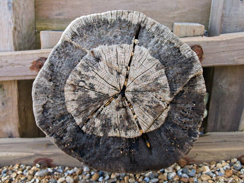 Plan rapproché d'un grand tronc d'arbre superficiel par les agents et mur en bois sur une plage photographie stock