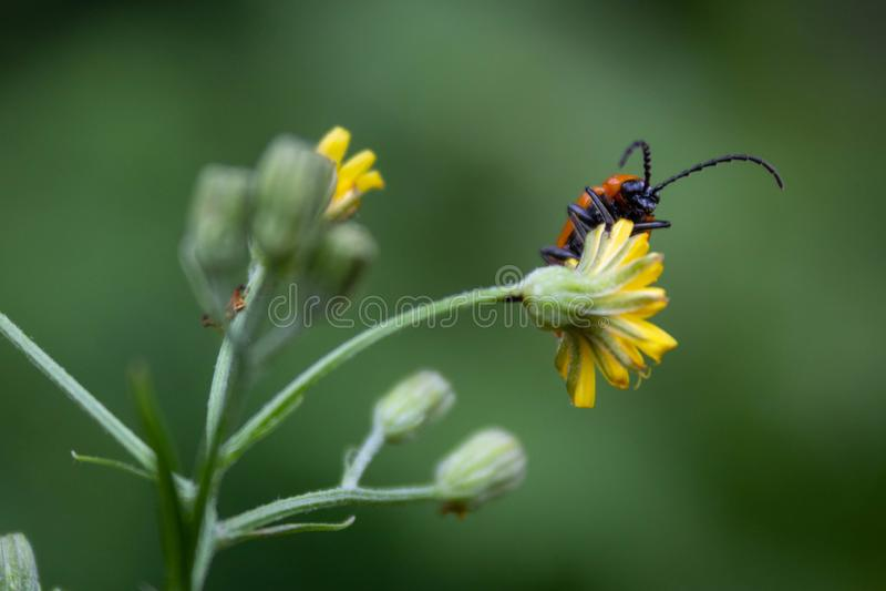 Plan rapproché d'un insecte sur une fleur photo libre de droits
