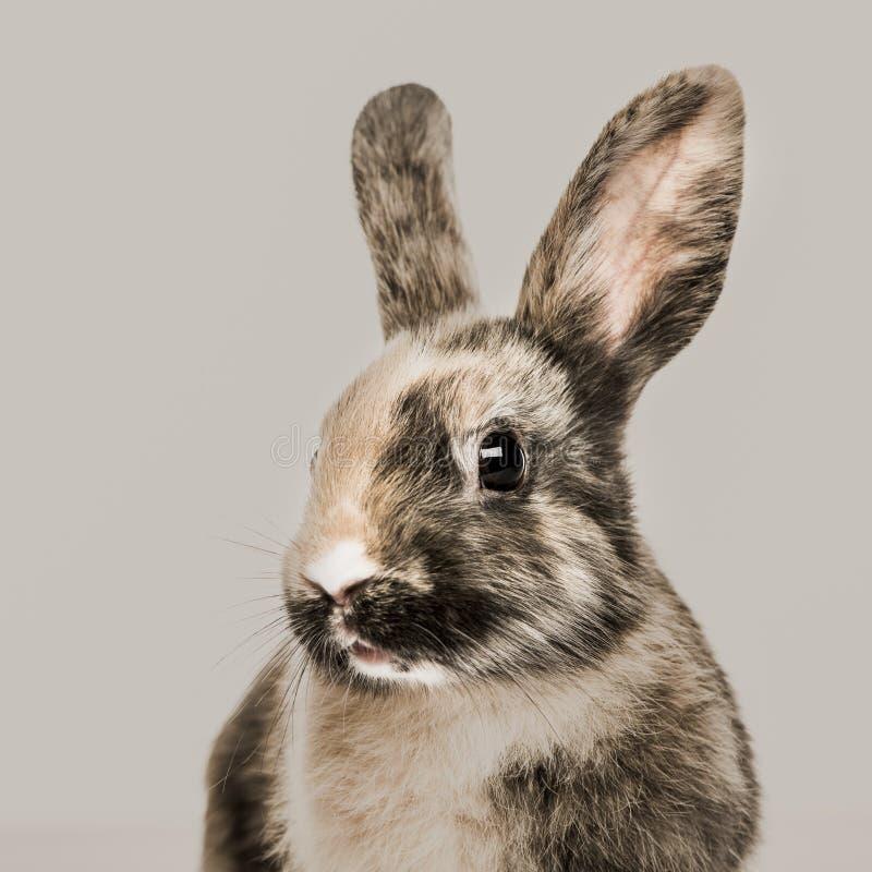 Plan rapproché d'un lapin images stock