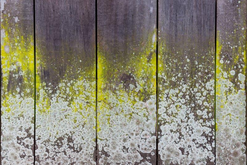 Plan rapproché d'un mur en bois de conseil avec le lichen photographie stock