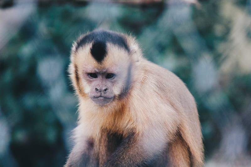 Plan rapproché d'un petit singe mignon image libre de droits