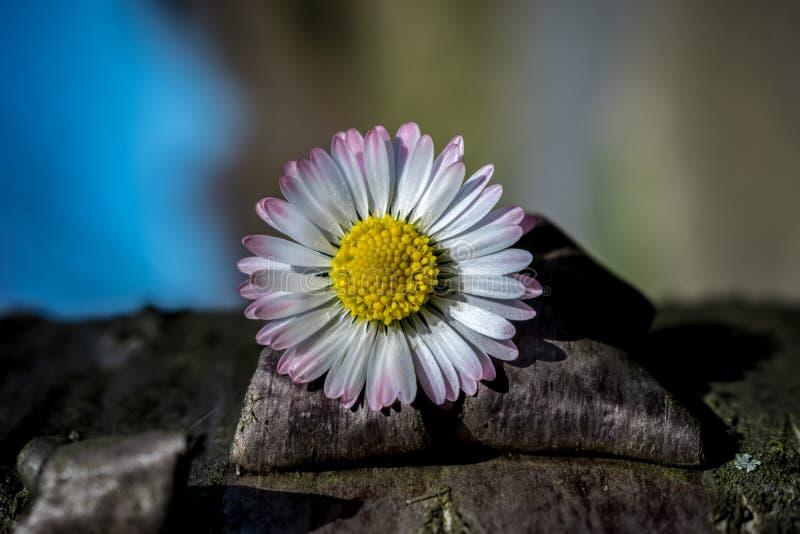 Plan rapproché d'une écorce d'arbre avec la fleur photographie stock
