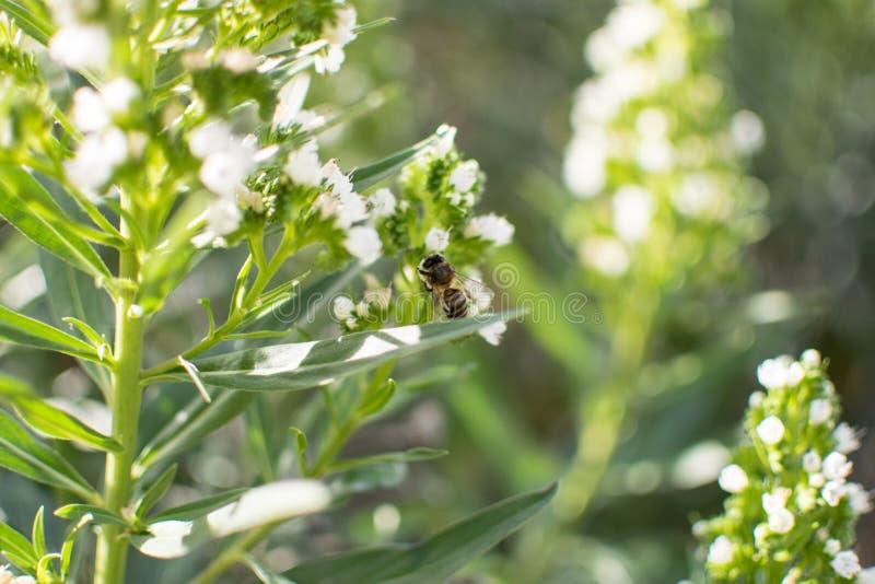Plan rapproché d'une abeille images stock