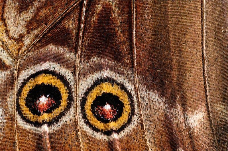 Plan rapproché d'une aile de papillon de morpho photos stock