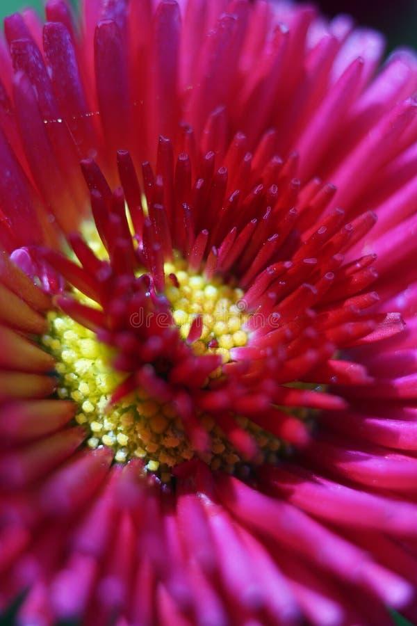 Plan rapproché d'une fleur images libres de droits