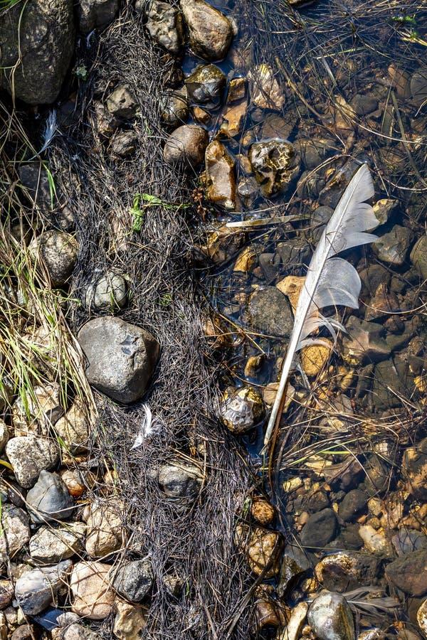Plan rapproché d'une fleur d'algues d'eau douce souffrant de l'eutrophisation grave après une longue période de la chaleur pendan photographie stock libre de droits