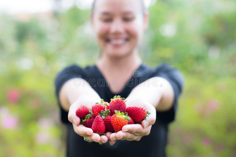 Plan rapproché d'une poignée de fraises parfaitement mûres tenu par une fille heureuse photos stock