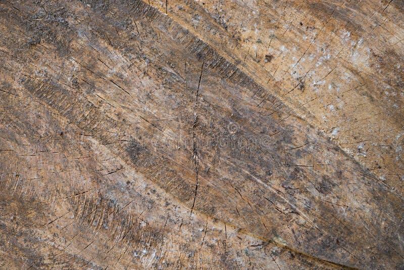 Plan rapproché d'une vieille section transversale de tronc d'arbre photographie stock