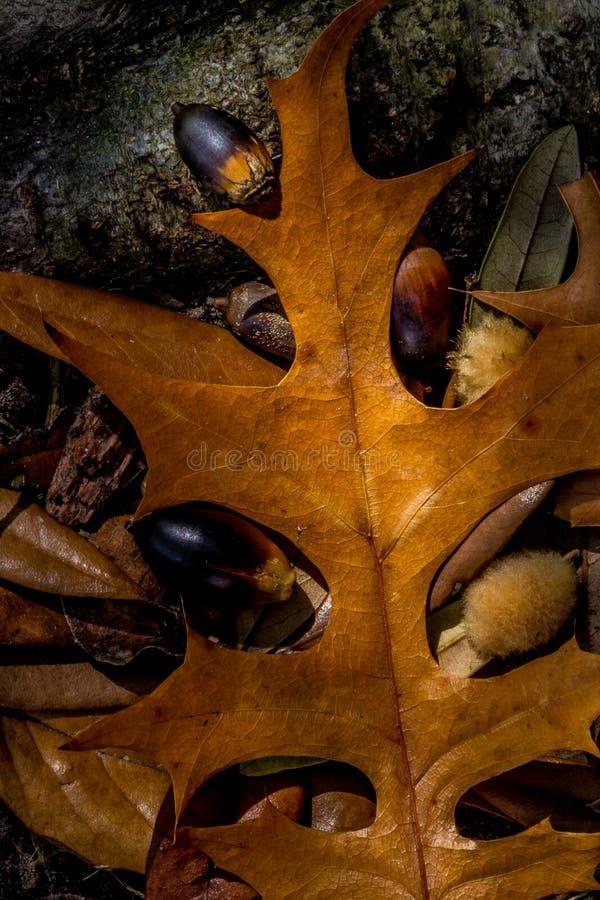 Plan rapproché de beau feuillage d'automne compliqué images stock