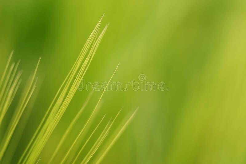 Plan rapproché de blé image libre de droits