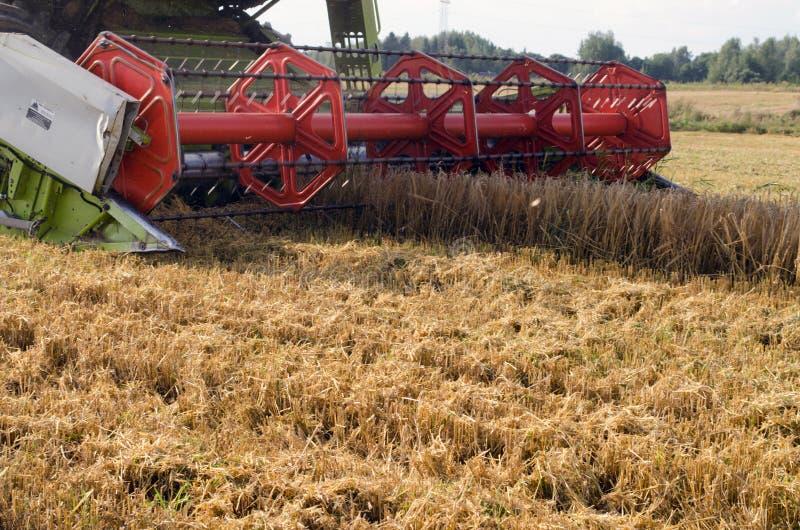Champ d'agriculture de blé de récolte de cartel de plan rapproché images stock