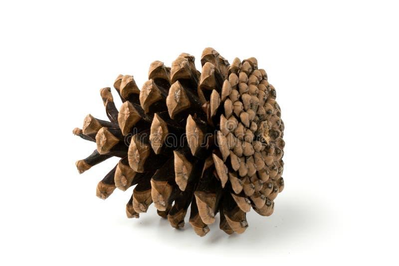 Plan rapproché de cône de pin image libre de droits
