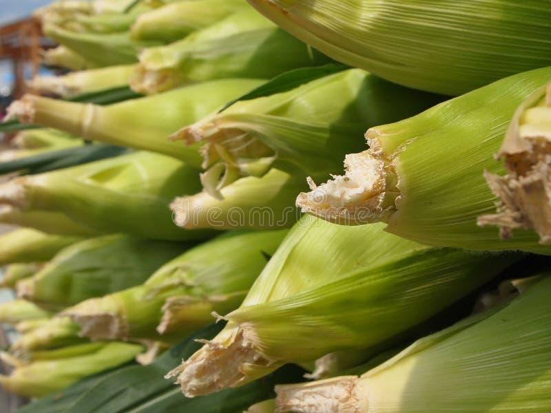 Plan rapproché de Cobbs de maïs photos stock