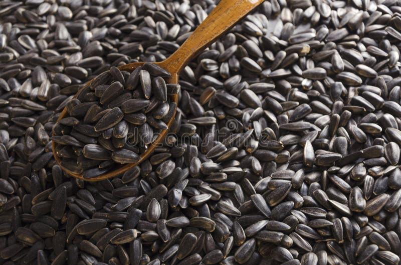 Plan rapproché de cuillère en bois sur les graines de tournesol juste rôties photo libre de droits