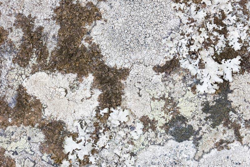 Plan rapproché de différents lichens sur une roche image stock